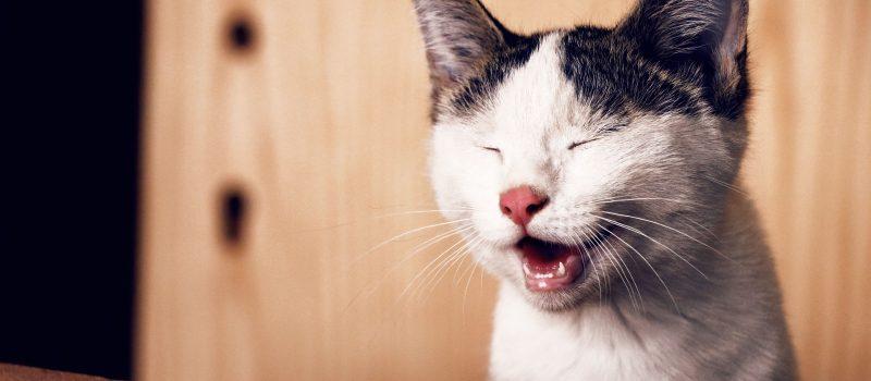 Umorismo: un alleato inaspettato per gestire ansia e stress