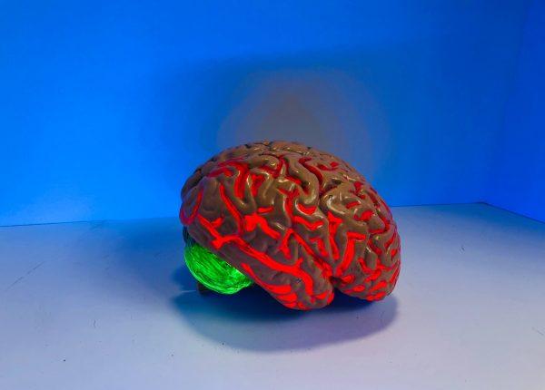 Ansia: quali sono i circuiti cerebrali coinvolti
