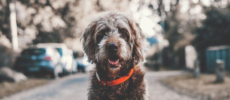 ESA: quando il terapeuta è… il cane