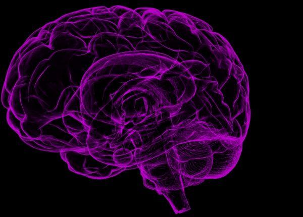 Il cervello degli adolescenti: creativo e sconsiderato