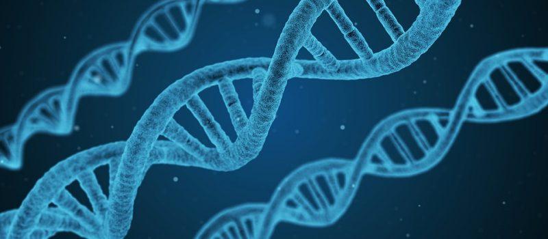 Gli effetti di un trauma si possono ereditare per via genetica?
